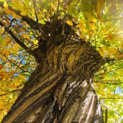 arbre_mumu_600x600